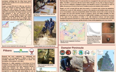 Conservation and management of the bilby in Western Australia: Partnerships with traditional owner rangers