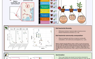 Local soil condition has complex effects on functional traits and germination of the endangered Acacia whibleyana